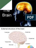 Brain Prof