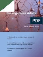 Neurogénesis Adulta - P. Angulo
