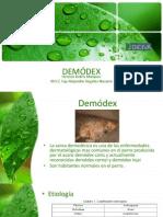 demódex