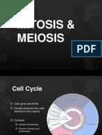 Mitosis & Meiosis