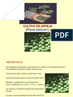 Arveja 1