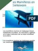 Animales Mamíferos en Galápagos