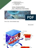 Clase Microfilamentos y Filamentos Intermedios 11 de Abril