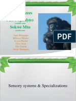 Chimpanzees Power Point