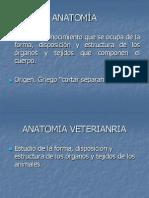 1 introduccios a la anatomia TERMINOLOGÍA ANATÓMICA