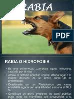 TRABALHO BACTERIOLOGIA - RAIVA