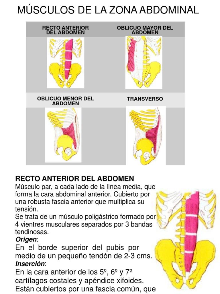 Tema 7. Musculos Zona Abdominal