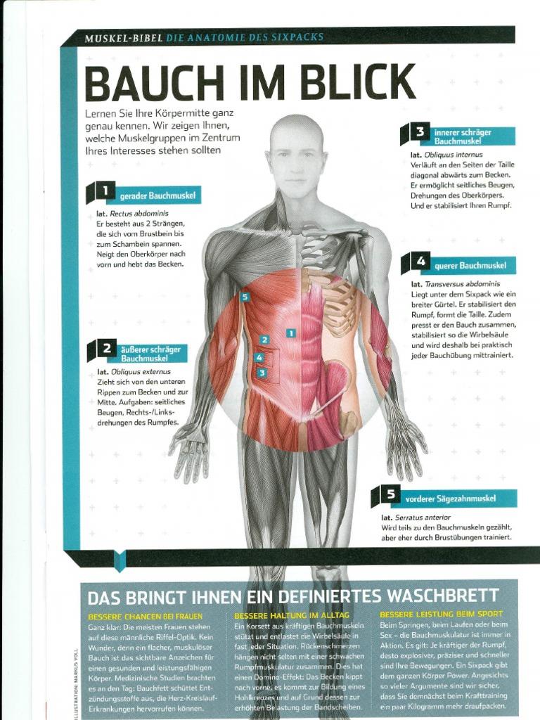 Charmant Bauchmuskulatur Anatomie Bilder - Menschliche Anatomie ...