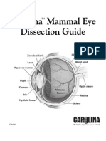 Mammal Eye Dissection
