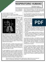 01 Sistema Respiratorio Humano