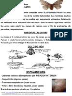 Promocion Social Guaca