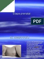 Etapaprenatal-090223203121-phpapp01