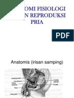 Anatomi Fisiologi Reproduksi Pria