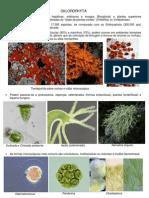 5. Chlorophyta