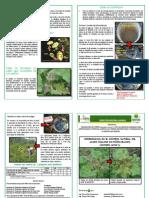 12.Control de acaro Piñon - Chazuta