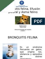 BRONQUITIS ASMA EFUSION