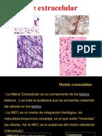 2_matriz_extracelular