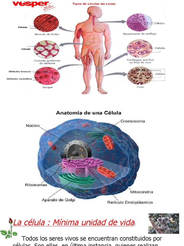 biologia przekonań pdf download