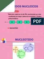 13.- Acidos nucleicos