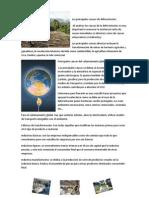 Las principales causas de deforestación