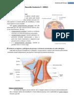 Resumo de Anatomia - Anatomia de Pescoço, Vias Aéreas Superiores e Inferiores, Aparelho Circulatório