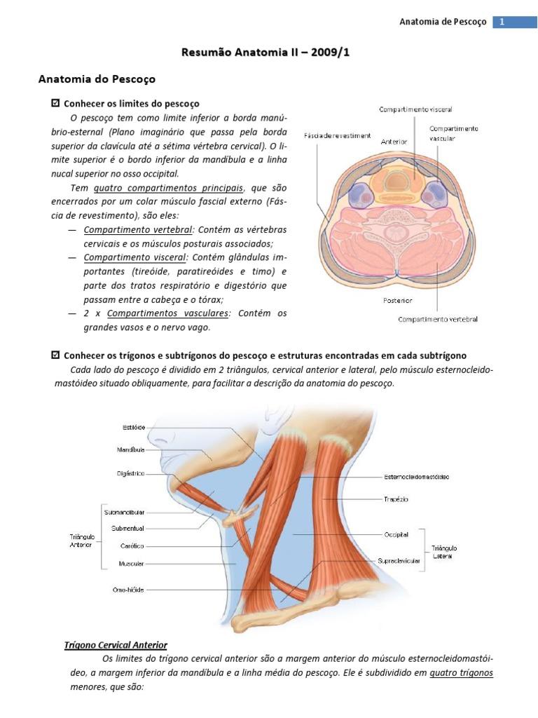 Resumo de Anatomia - Anatomia de Pescoço, Vias Aéreas Superiores e ...
