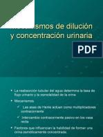 Mecanismos de Dilución y Concentración Urinaria