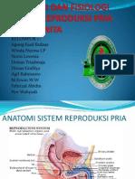 Anatomi Dan Fisiologi Sistem Reproduksi Pria Dan Wanita
