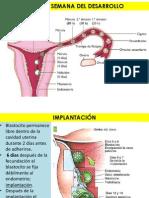 Embriología, Raul.