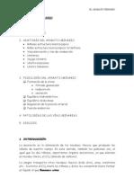 6-EL_APARATO_URINARIO