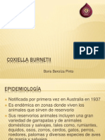 coxiella burnetii