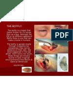 The Botfly