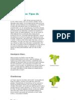 Vinos chilenos.doc