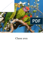 11. Classe Aves