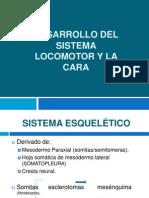 Desarrollo Del Sistema Locomotor y La Cara