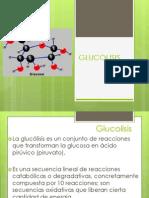 GLUCOLISIS 1