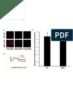 Supplementary Niemann-Pick Disease Type C1