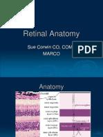 Retinal Anatomy