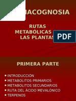 14157870 Rutas Metabolic As en Plantas