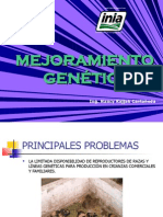MEJORAMIENTO GENETICO www.peru-cuy.com