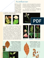 PFRD_1999_Acanthaceae