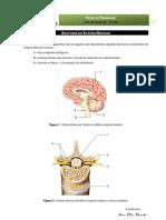 Ficha de Trabalho-anatomia SNC