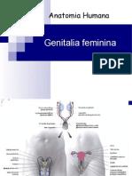 Genitalia Feminina