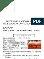 Porcinocultura I conferencia