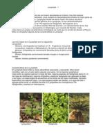 SporePlantsLycophyta213.en.es