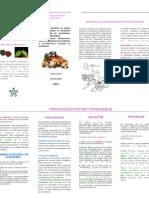 Fisiologia Frutas y Hotalizas