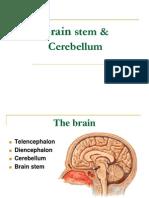 Brain Stem & Cerebellum
