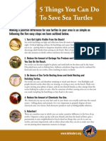 Five Things You Can Do to Save Sea Turtles