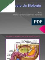 Biología - María fernanda Lemos