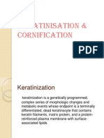 Keratinisation and Cornification